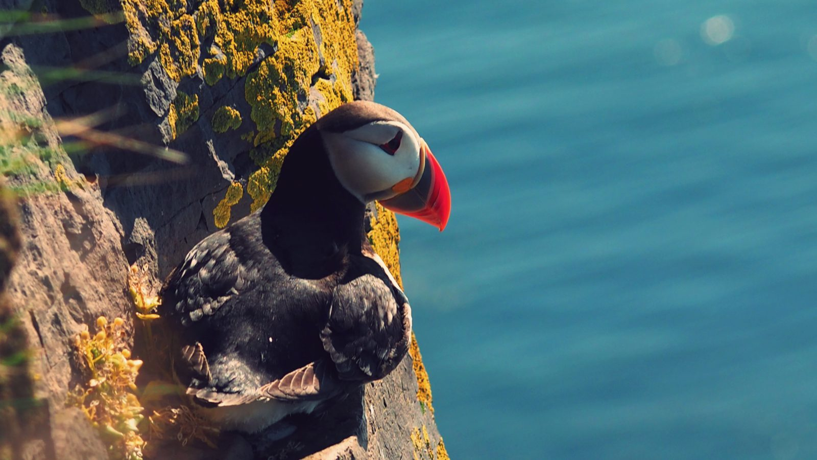 Puffin Collection